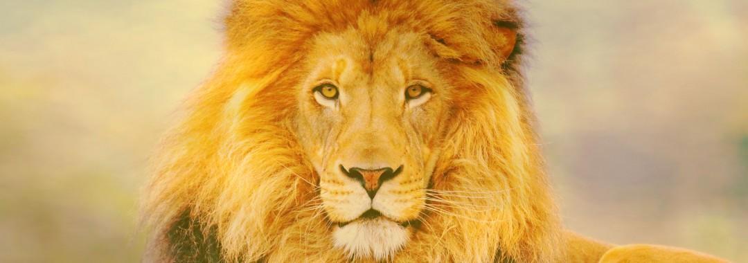 løve - golden